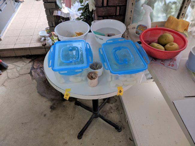 試食,幸水,豊水