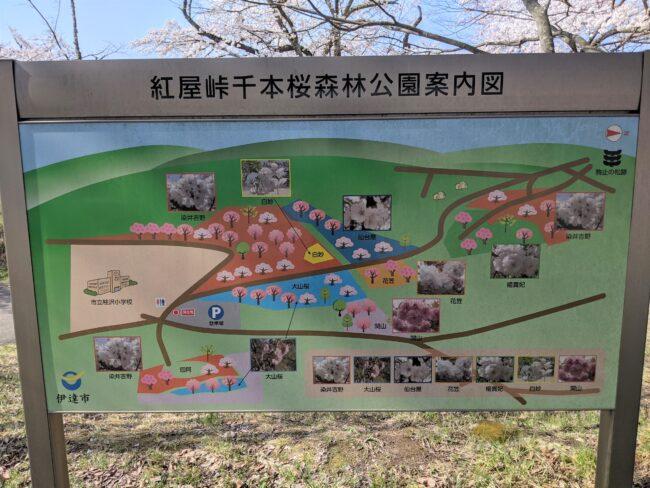 紅屋峠千本桜森林公園